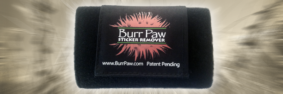 BurrPaw -- Burr, Seed and Sticker Remover burr remover, sticker, seed, burdock remover, cockaburr remover